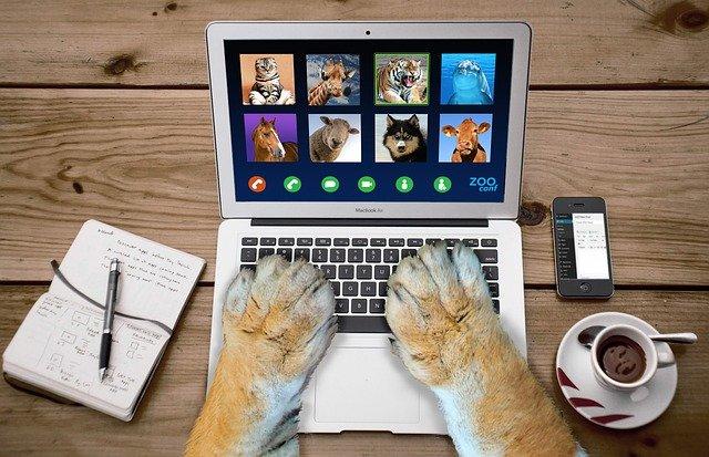 pets fazendo chamada de vídeo
